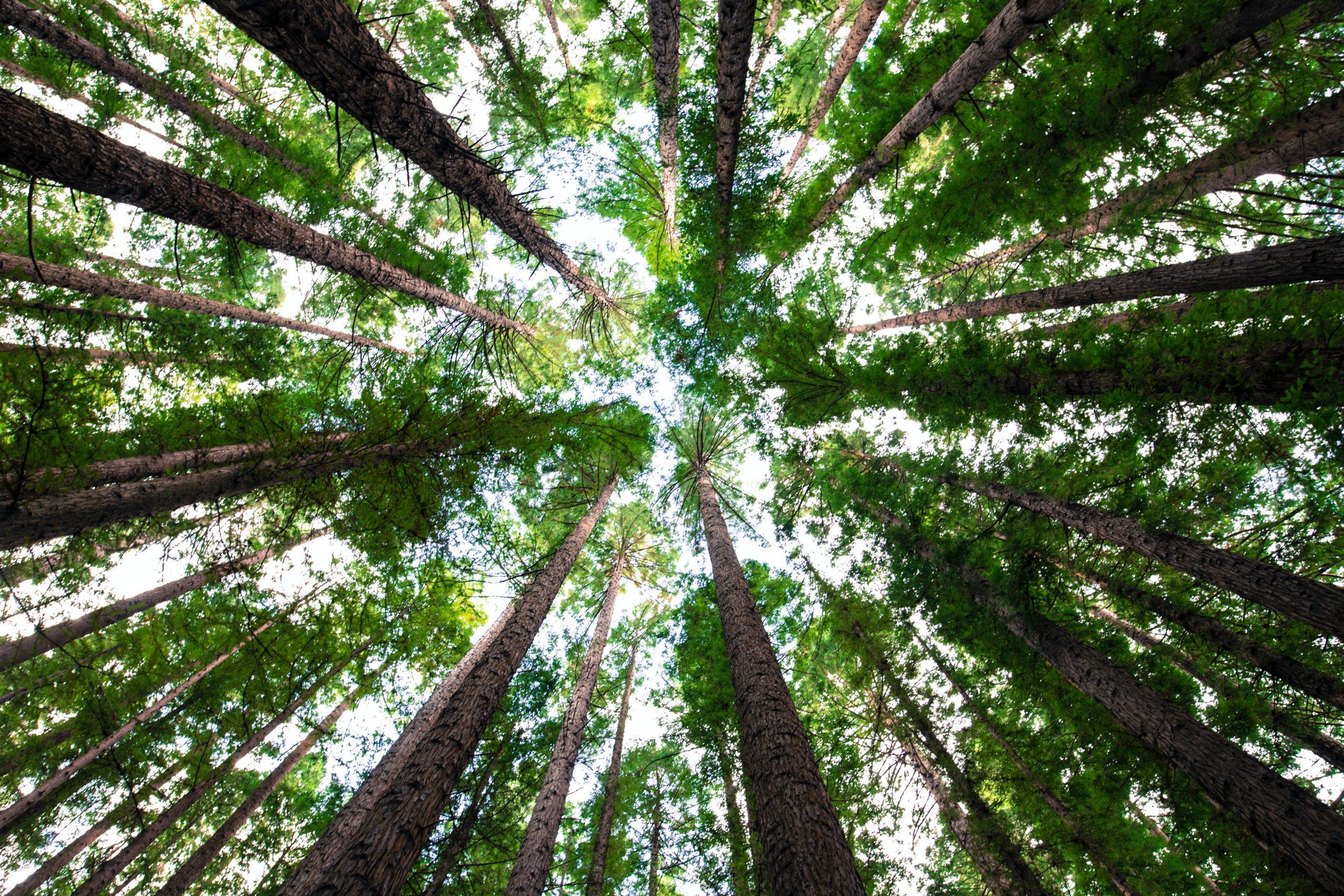 We plant trees! Breathe…